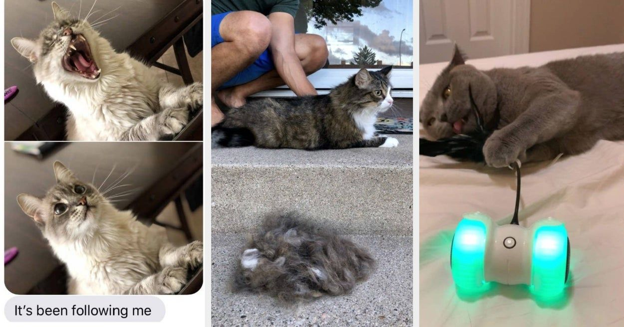 31 Things From Amazon That Ll Probably Make Your Cat Think You Re Not Bad For A Human In 2020 Cat Cleaning Bad Cats Cats