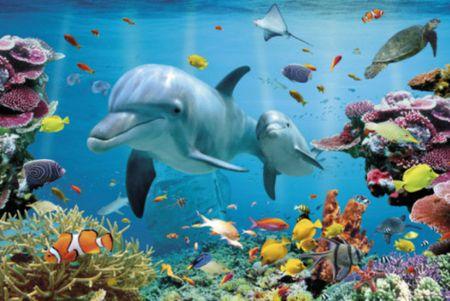 Cool Ocean Animal Wallpapers