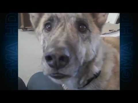 Viral On Youtube This Voiceover Is Priceless The Dog Was Adopted