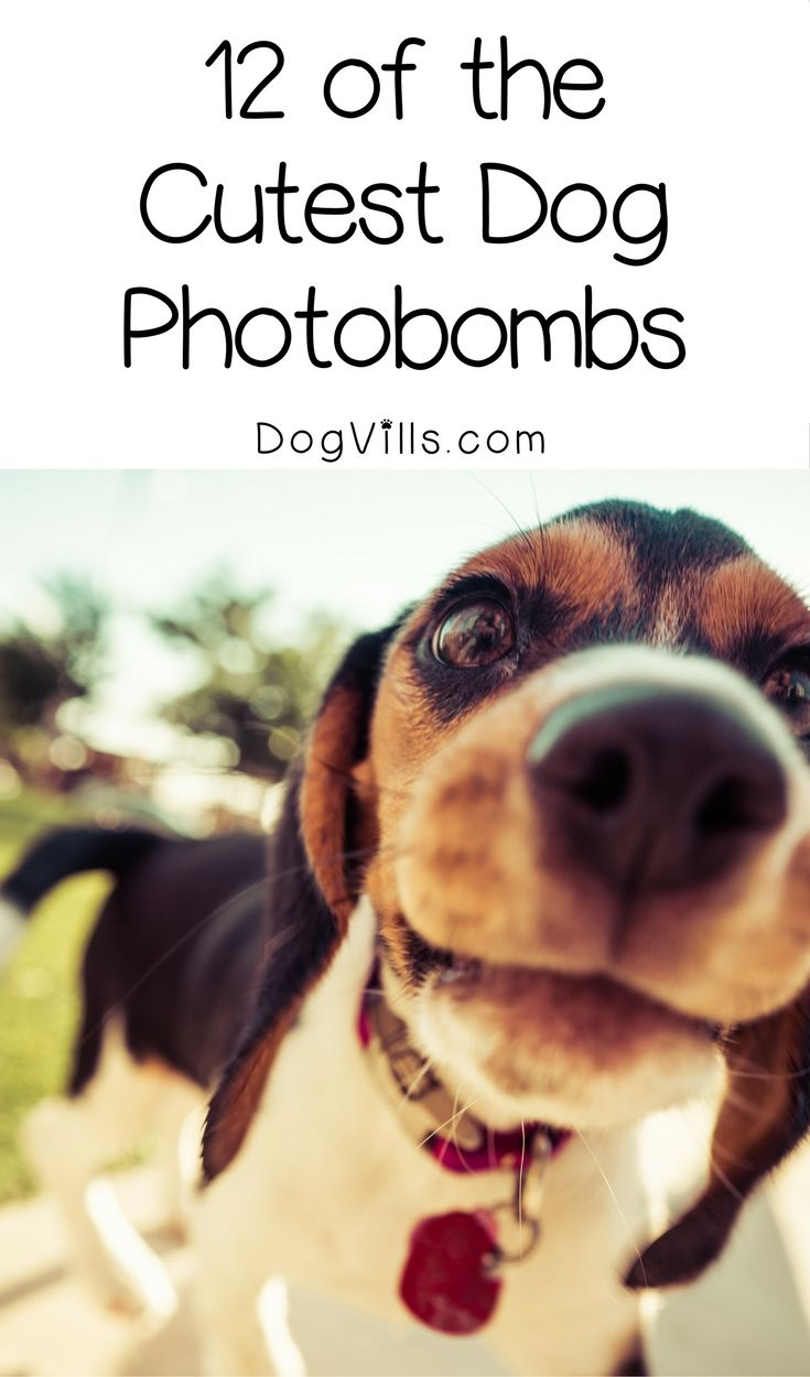 Cute Dog Pictures 12 Of The Best Dog Photobombs Ever Dog
