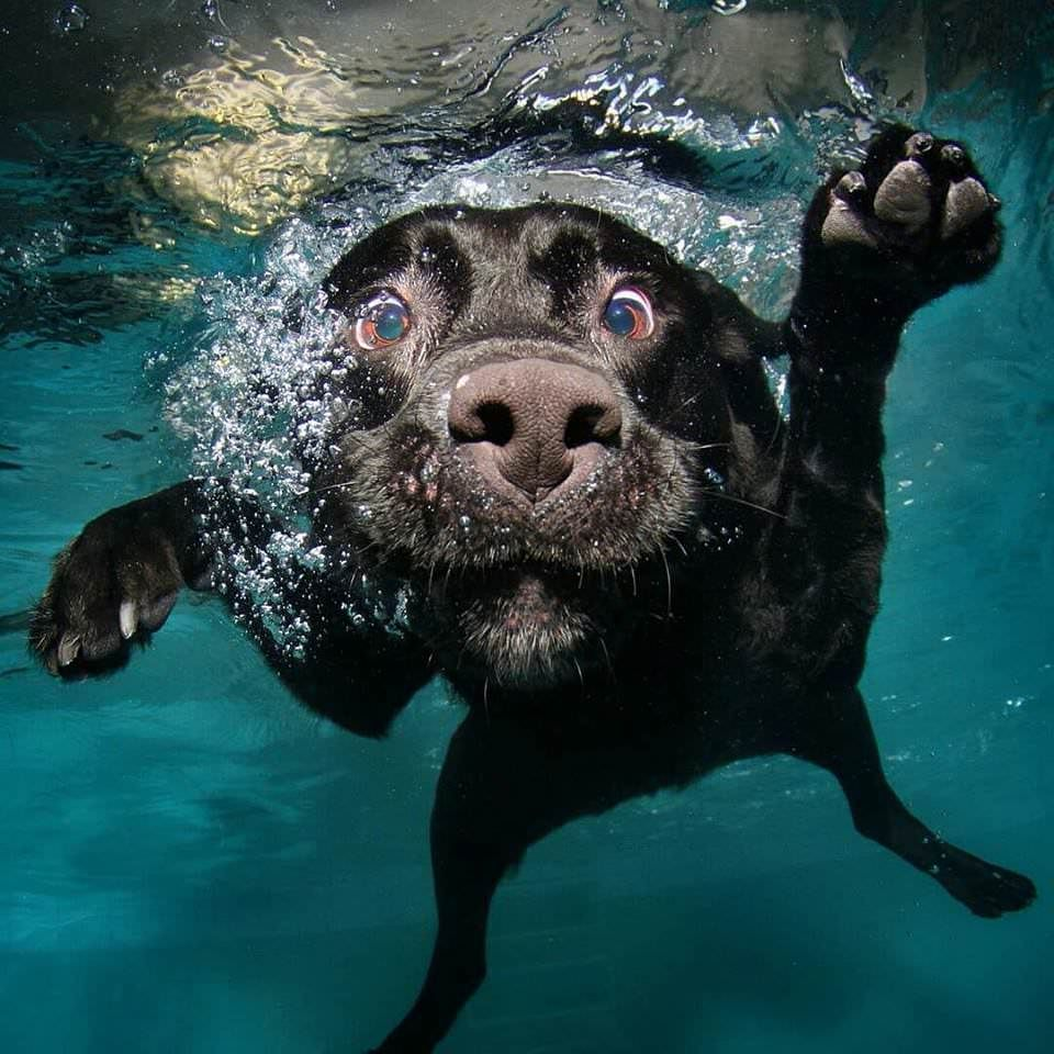 Can T Stop Laughing At These Dogs Underwater Https I Imgur Com