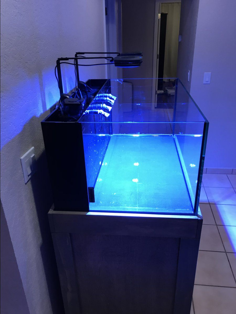 Click This Image To Show The Full Size Version Aquarium Reptile Tank Fish Tank
