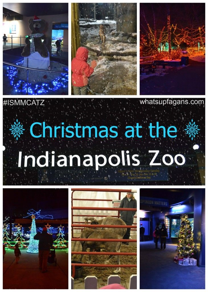 Christmas At The Indianapolis Zoo Christmas At The Zoo Kids Entertainment Fun Things To Do