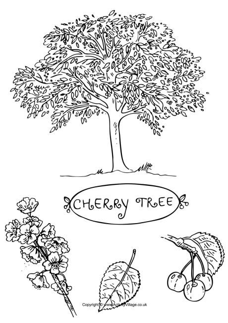 cherry tree colouring page different tree coloring pages has the leaf fruit and - Cherry Blossom Tree Coloring Pages