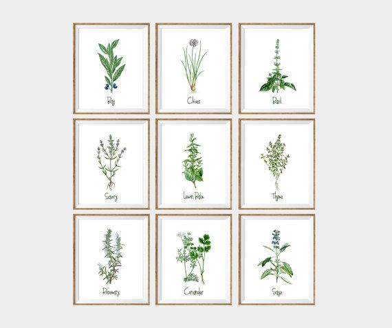 Culinary Herbs Art Print Set Of 9 Kitchen Wall Art Herbs And