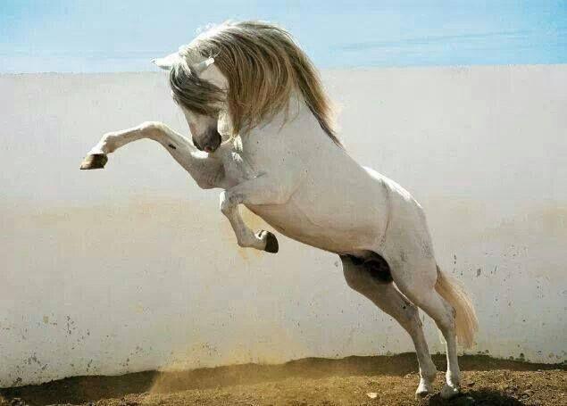 Horses Fb