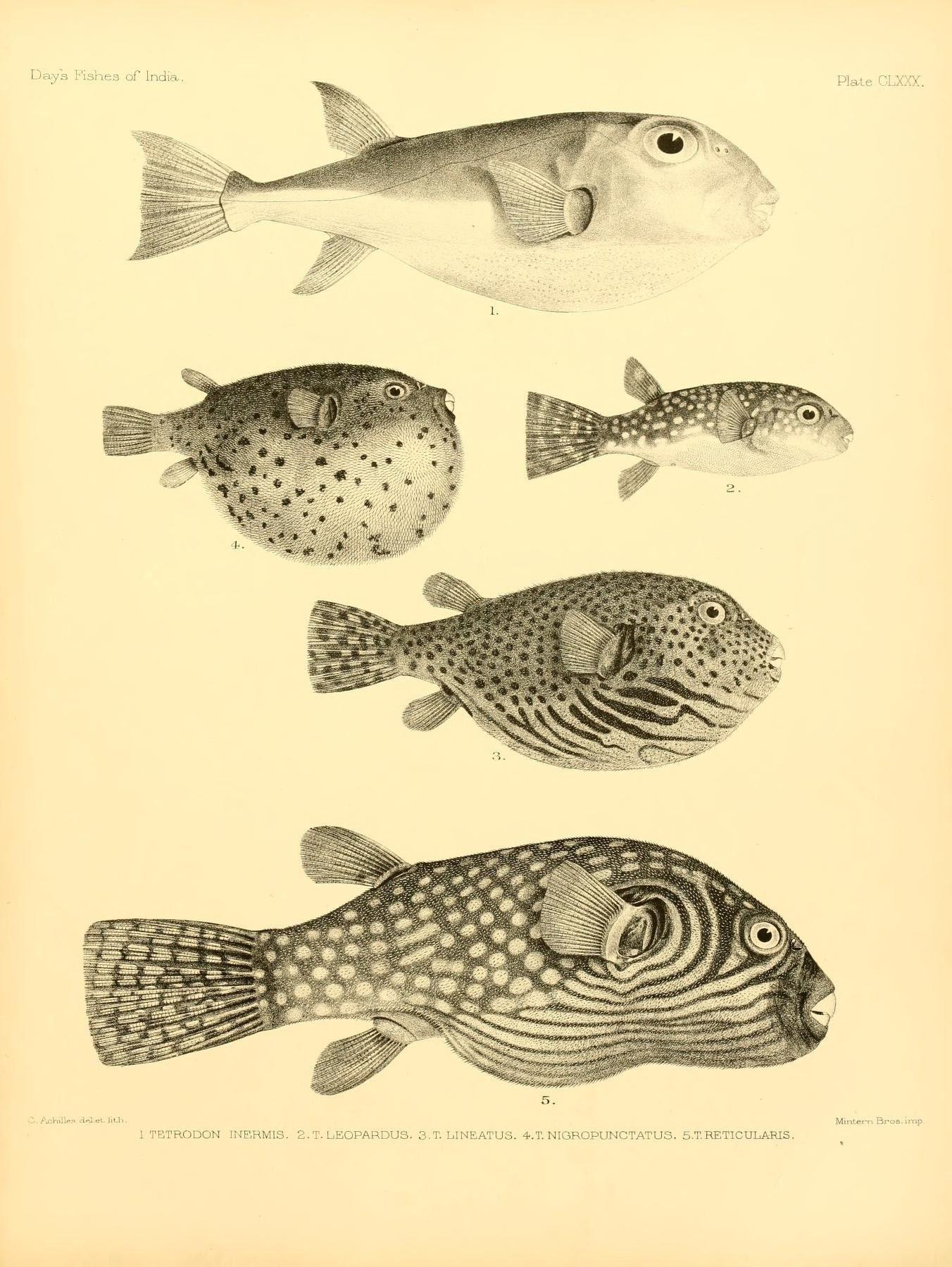 Pin de GUILLERMO URBINA en diseño relacionado con peces | Pinterest ...