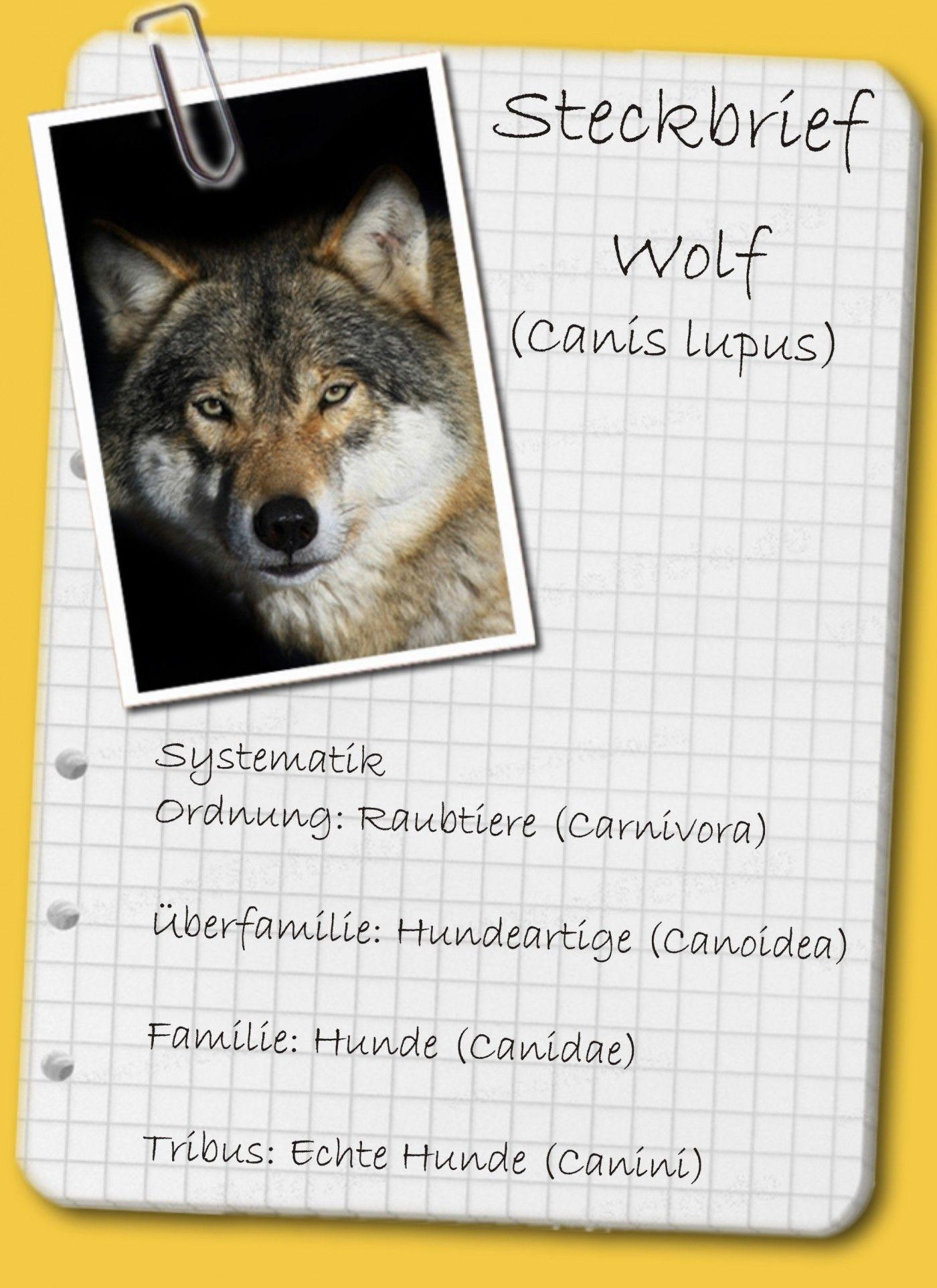 Wolf Steckbrief Referat