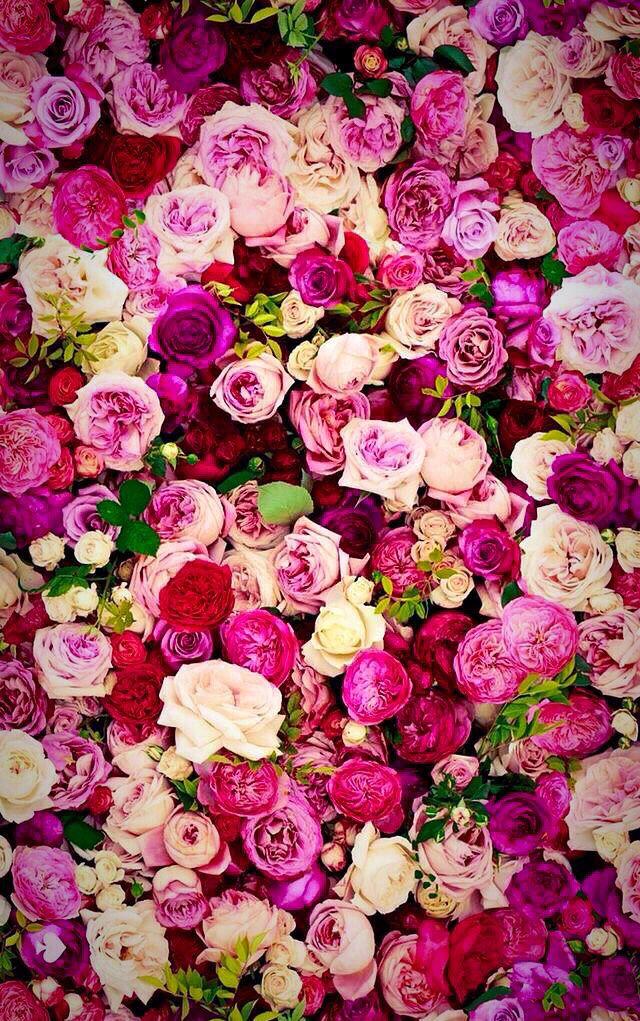 Wallpaper Iphone Rose Rose Wallpaper Flower Wallpaper Iphone Wallpaper