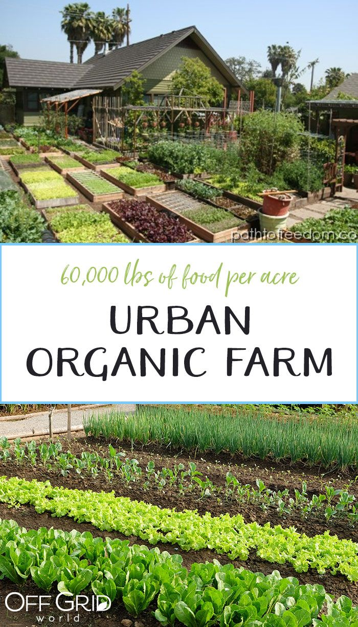 60000lbs of Organic Food Per Acre  Off Grid World