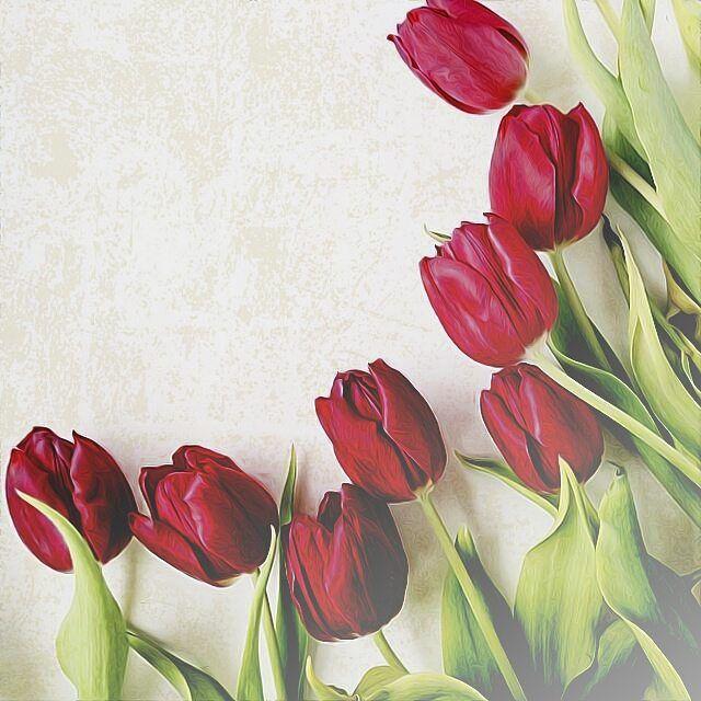خلفية من حساب A Aisha87 A Aisha87 A Aisha87 الذاكره كالمشي ع الرمال كلما تسير تترك اثر قدميك خلفك Framed Wallpaper Paper Flowers Floral Border