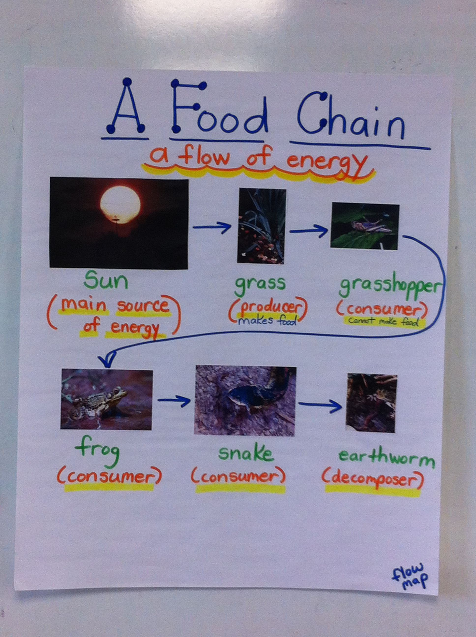 A Food Chain