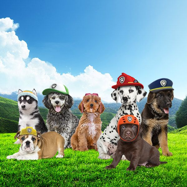 These pups think they're real-life members of the PAW Patrol