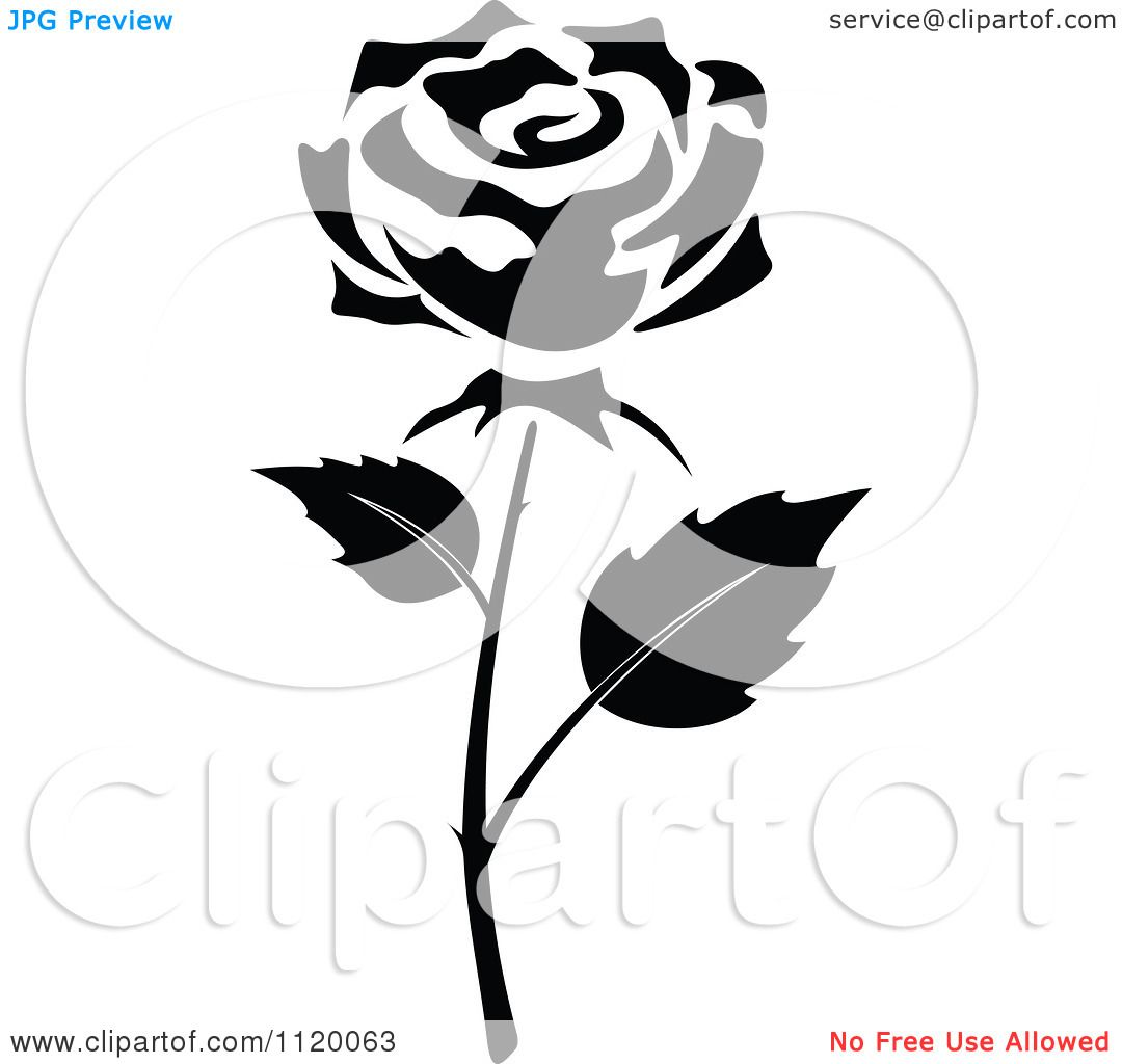 Flower Black And White Rose Background 1 Hd Wallpapers Amagico