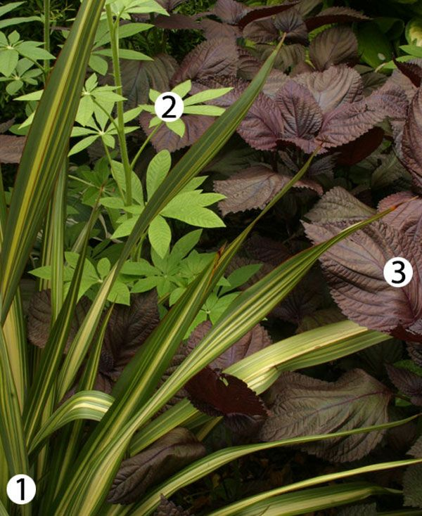 10 combinations for shade gardens from Fine Gardening.
