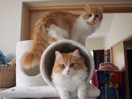 ウララグふくはうち の猫