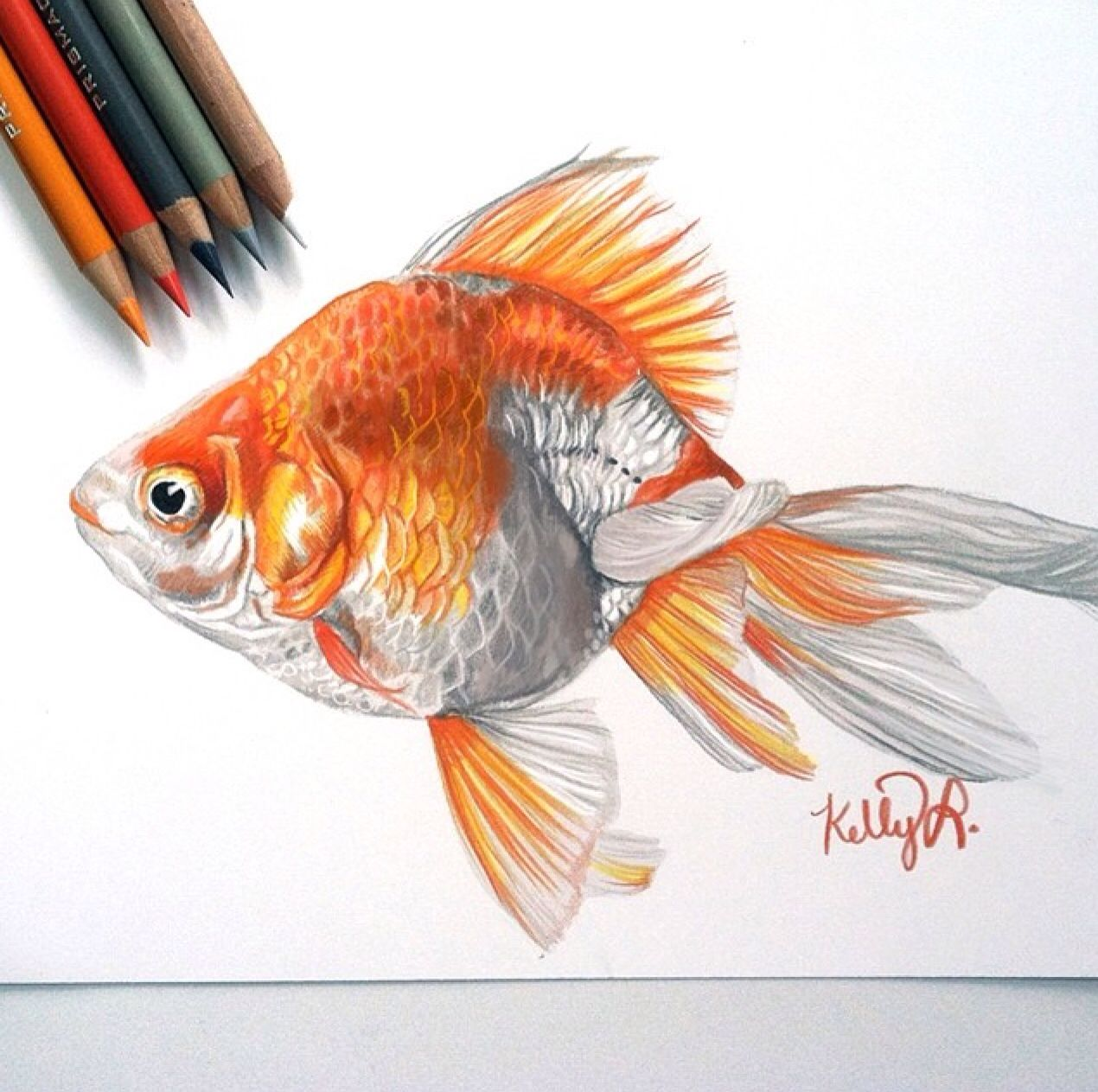 It's just a picture of Sassy Realistic Fish Drawing