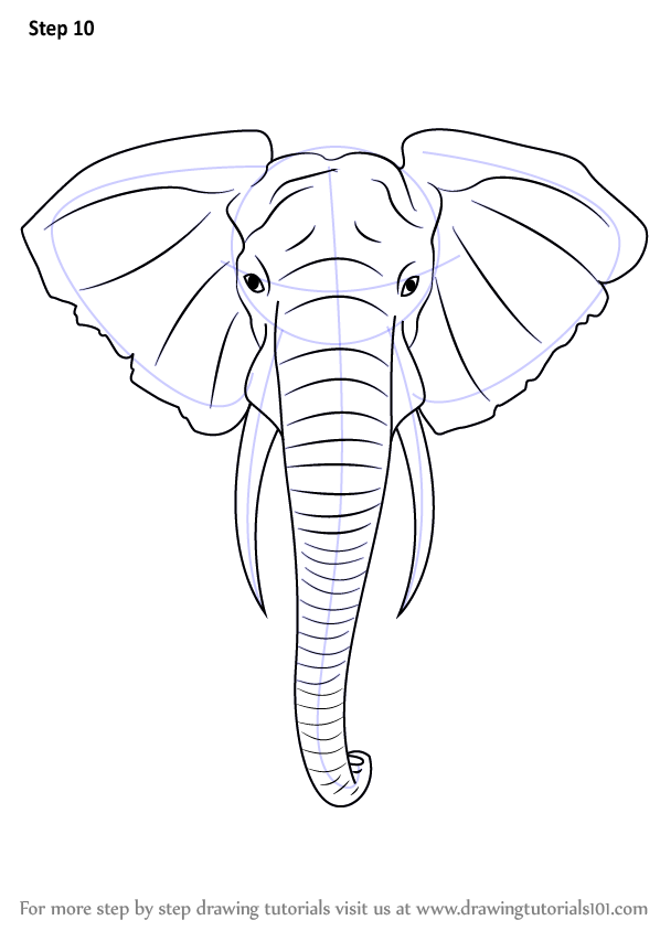 Step by step how to draw an elephant head