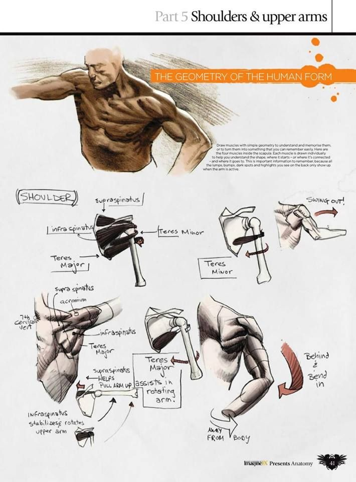 Pin By Jelly On Arms Study Pinterest Anatomy Character Design