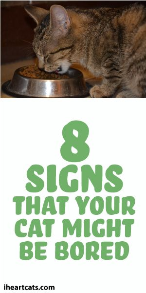 8 Signs That Your Cat Is Bored