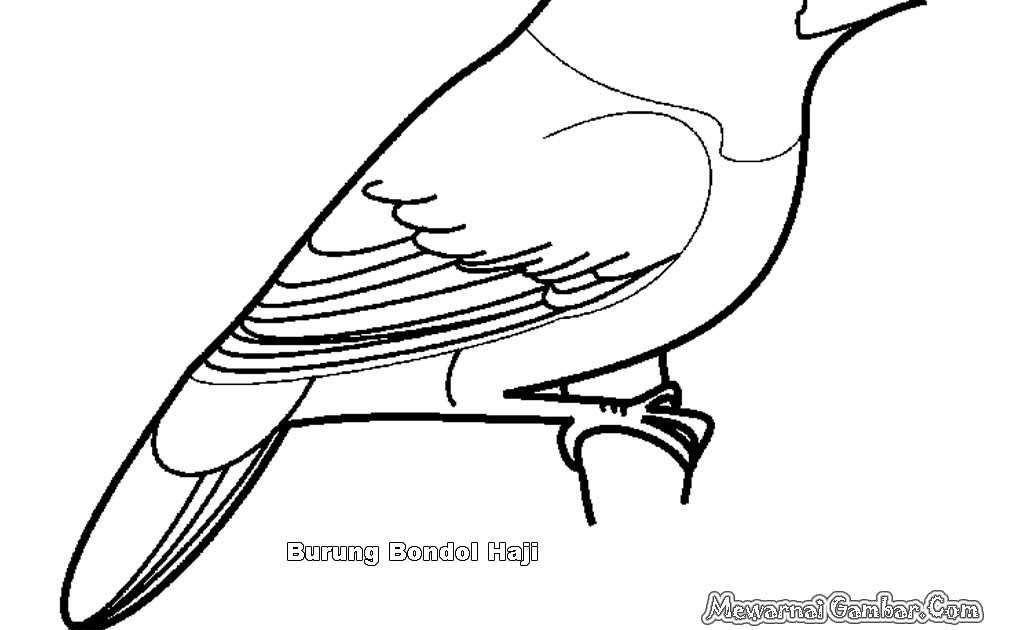 Paling Keren 30 Gambar Kartun Hitam Putih Burung Di 2020 Dengan