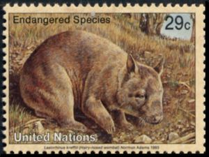 Northern Hairy-nosed Wombat (Lasiorhinus krefftii ...