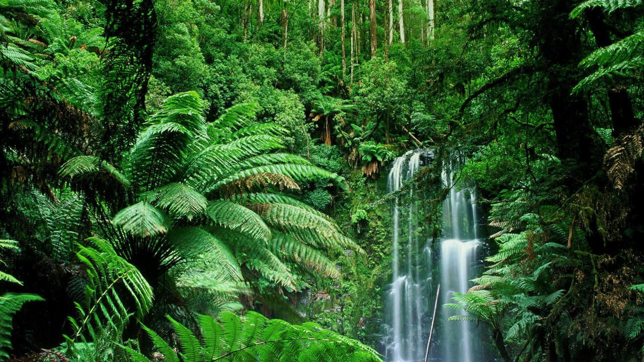 Image Result For Amazing Jungles And Forests With Animals