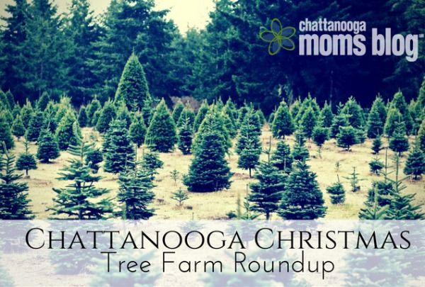 Chattanooga Christmas Tree Farm Roundup Christmas Tree Farm Tree Farms Tree