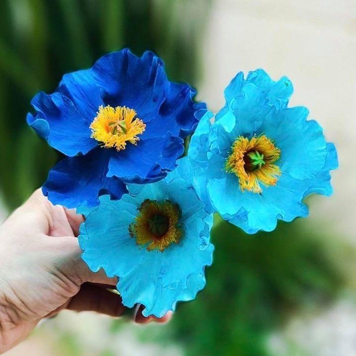 Himalayan Blue Poppy Bouquet Himalayan Blue ...