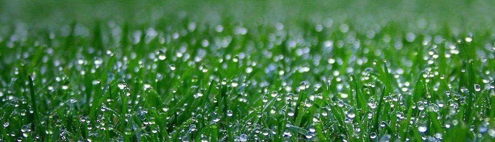 Fall Lawn Care Tips for Philadelphia Easy Care