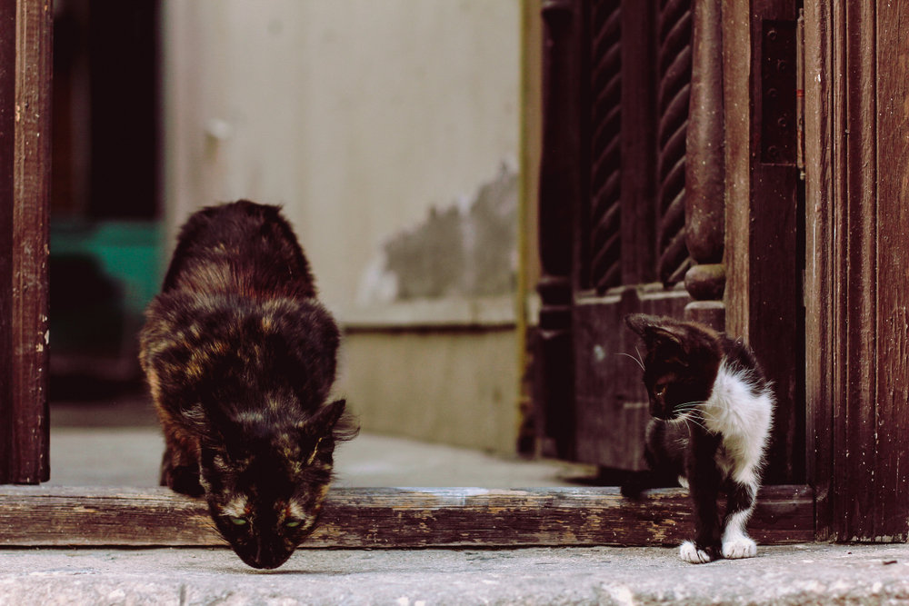 Beautiful Stray Cats Amazing Eyes Streets Cool Eyes Stray Cat Cats