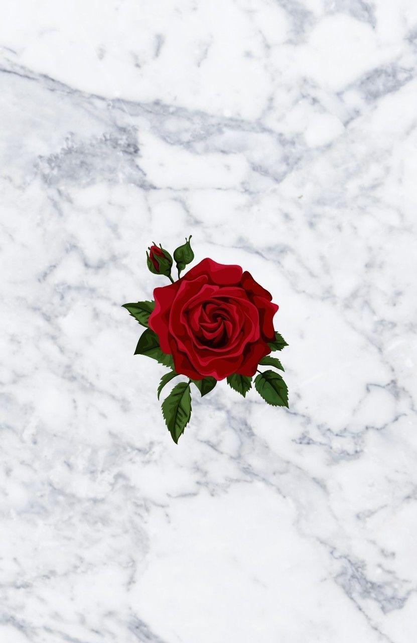 Roses on marble have never looked better 😊 Pretty