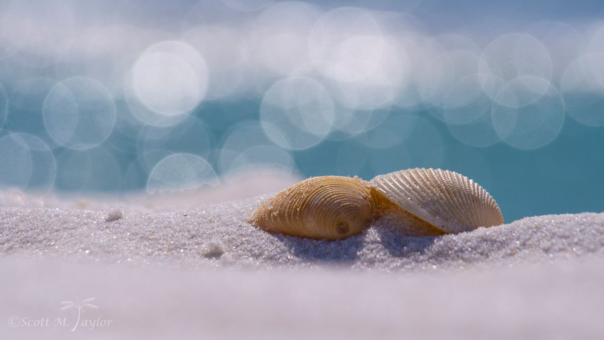 Sand Together - A pair of seashells, together in the sand