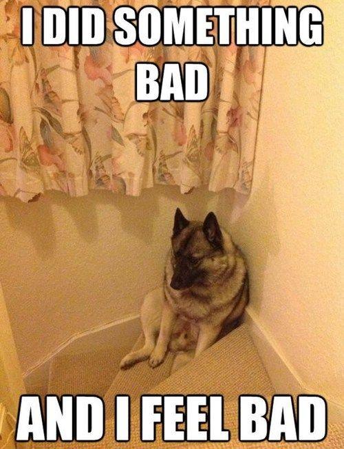 Im A Bad Dog German Shepherds Dog And Animal