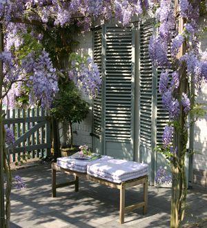 Wisteria sinensis blauwe regen g a r d e n s pinterest wisteria pergolas and gardens - Pergola klimplant ...