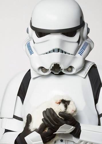 Star Wars Piggy Guinea Pigs