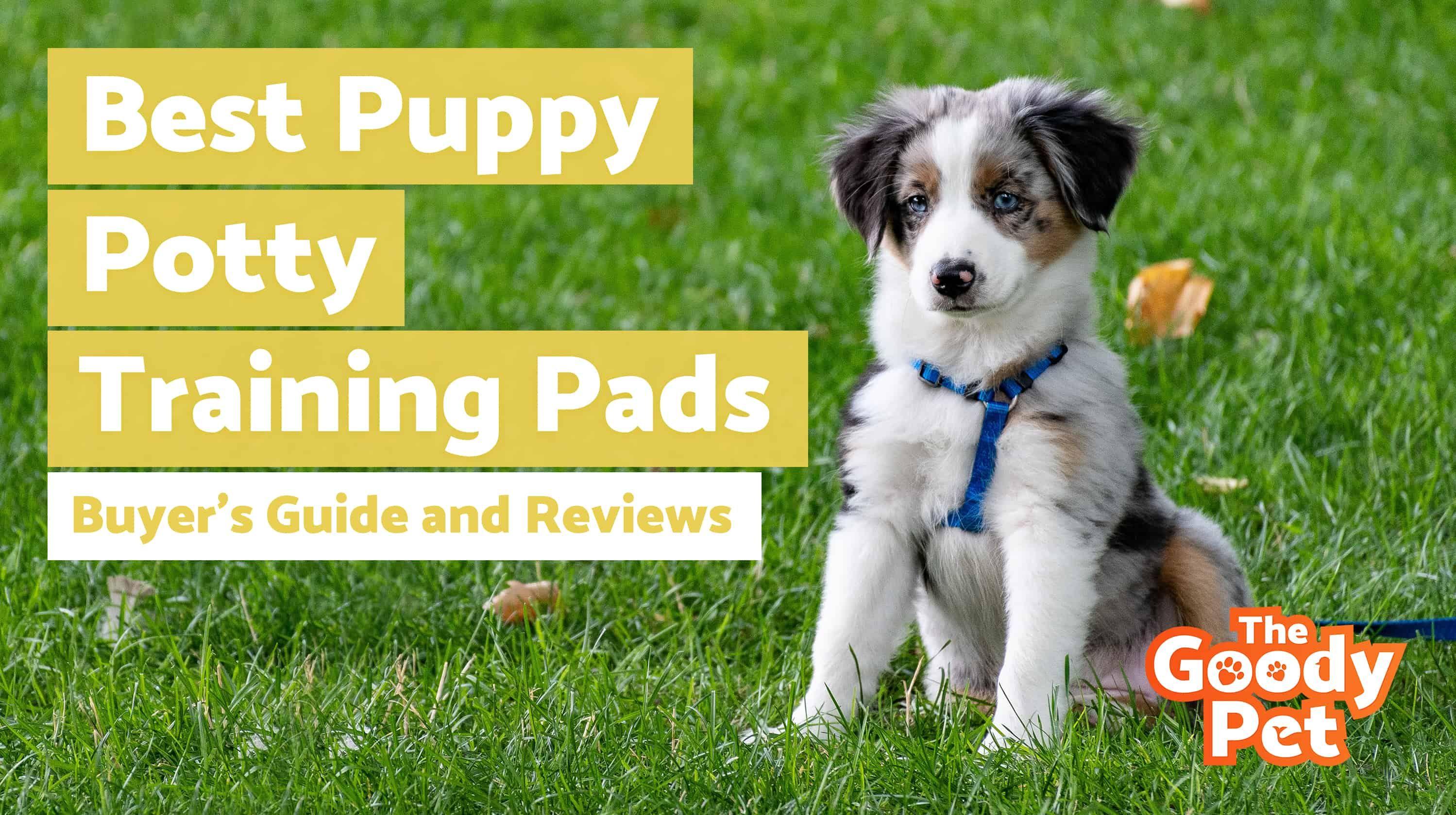 f6a540a9b2aaa8c97d697646ca00cde0 - How To Get My Puppy To Use Puppy Pads