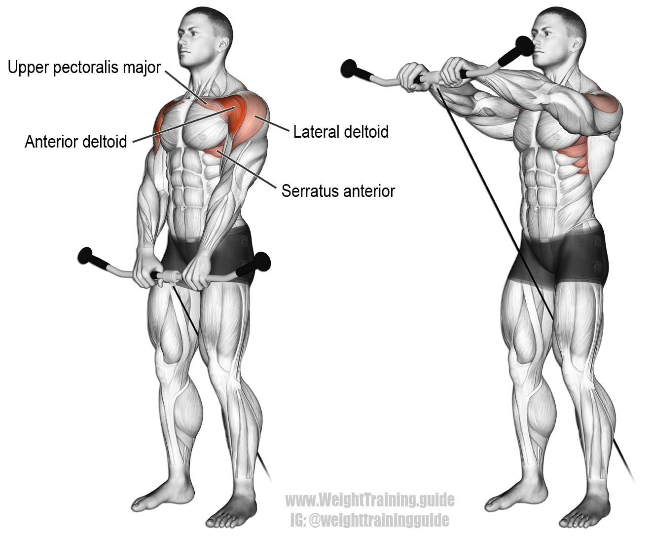 Cable front raise exercise instructions and video | Pinterest ...