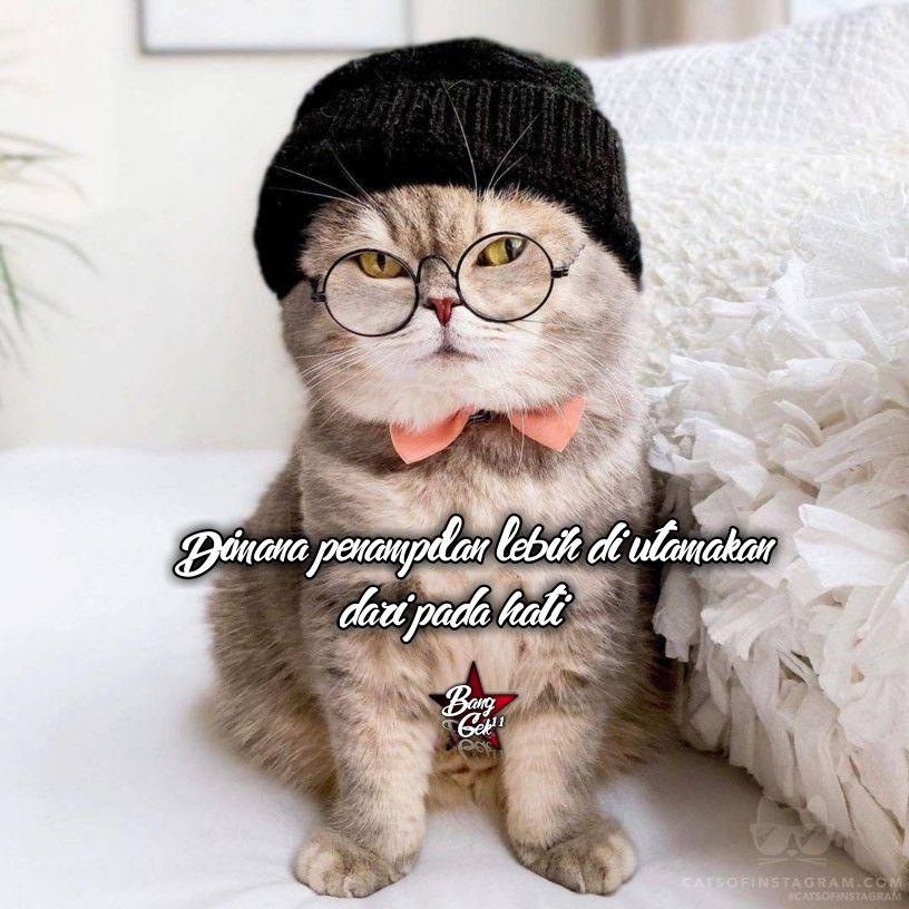 Kata2 Lucu Kucing Lucu Lucu
