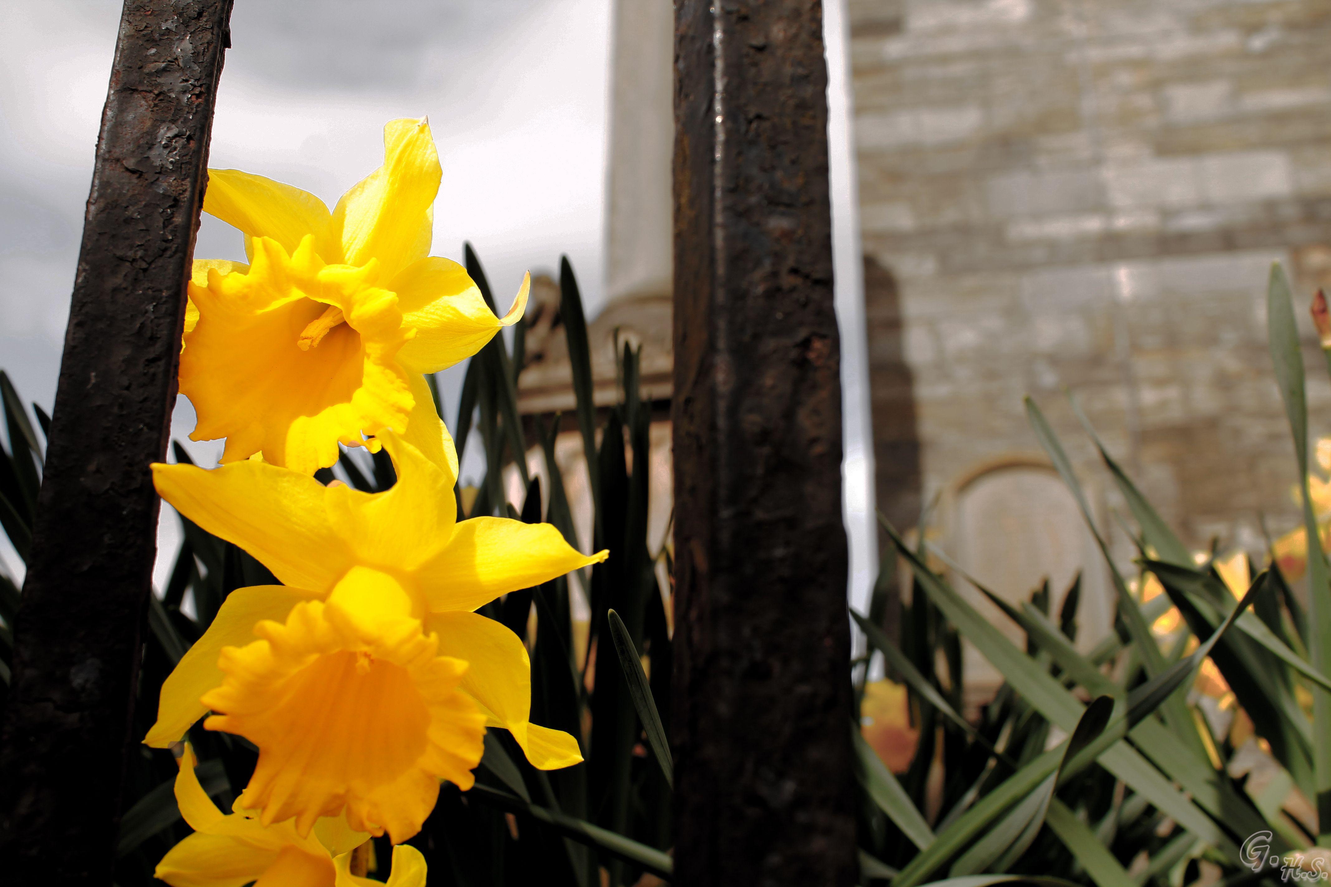 Primavera encarcelada