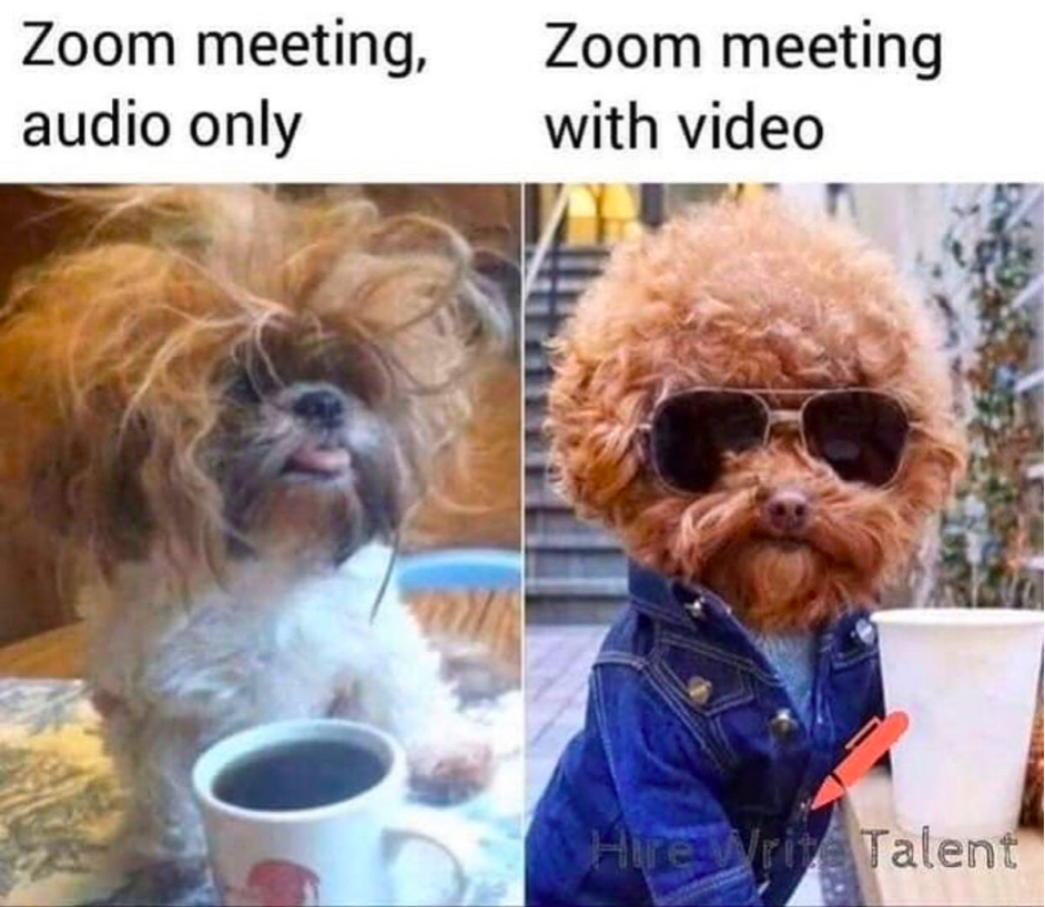 Hearted It Zoom Really Funny Memes Crazy Funny Memes Funny Relatable Memes