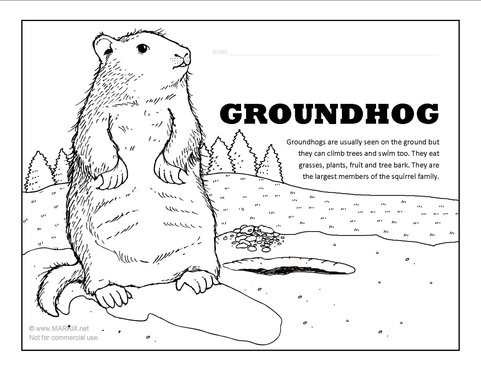 Groundhog Coloring Page