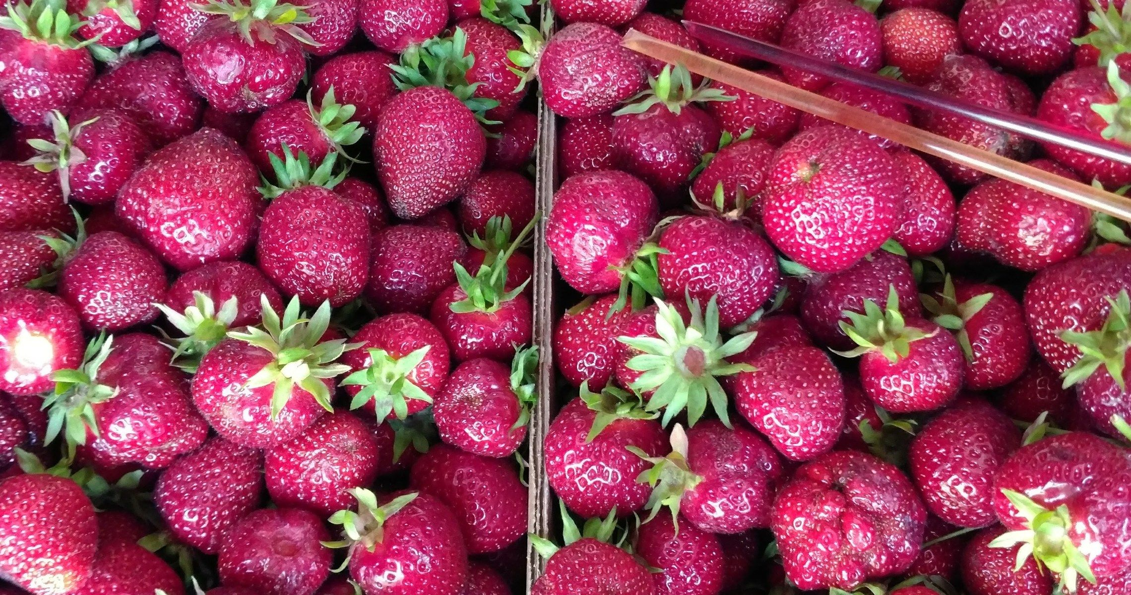 Strawberry Picking 2017 Part 1 Drying and Freezing