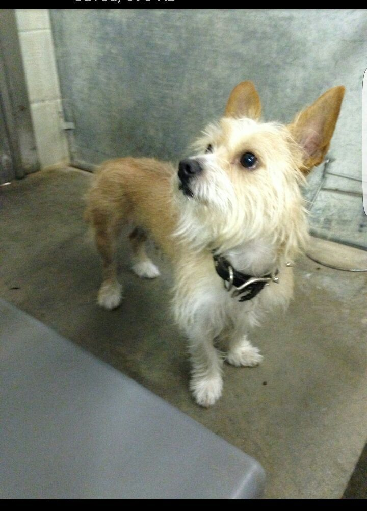 Gregg Pugliese Enfield Dog Park Action Committee Yorkie Brown White October 24 This Dog Was Abandoned At The Dog