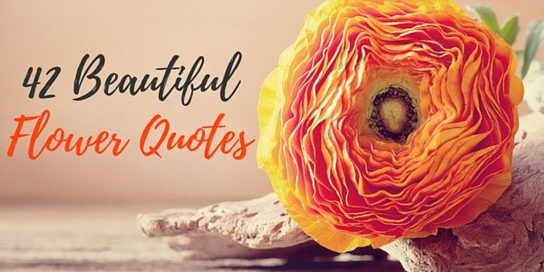 42 beautiful flower quotes happiness 42 beautiful flower quotes mightylinksfo