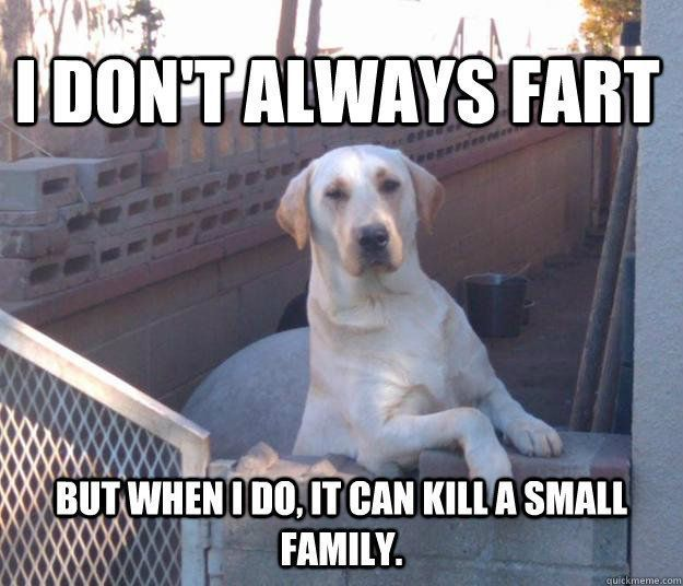 46 Dog Memes With Captions That Will Make You Lol Clean Funny Memes Super Funny Memes Funny Dog Memes