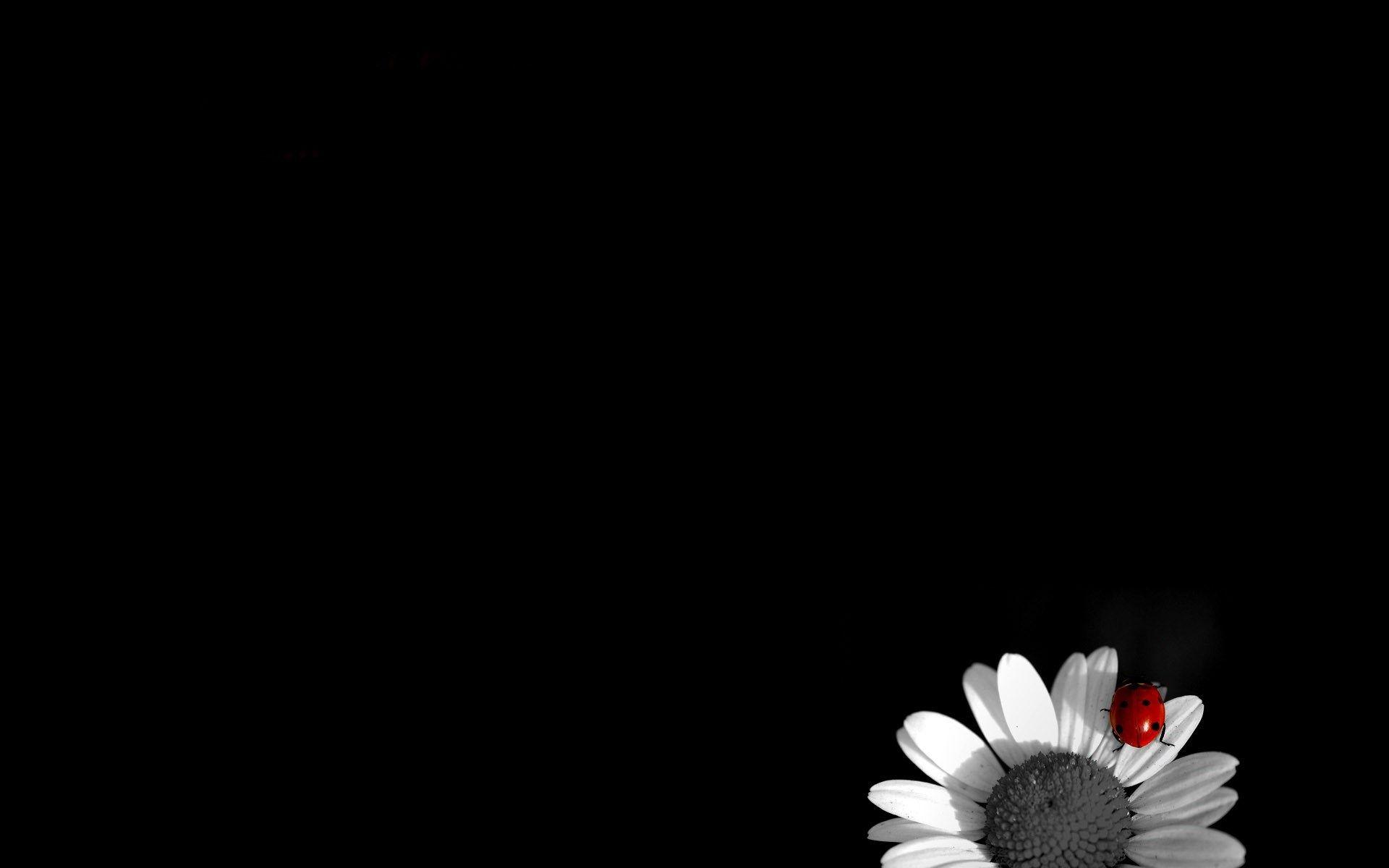 black and white flower wallpaper hd for desktop background