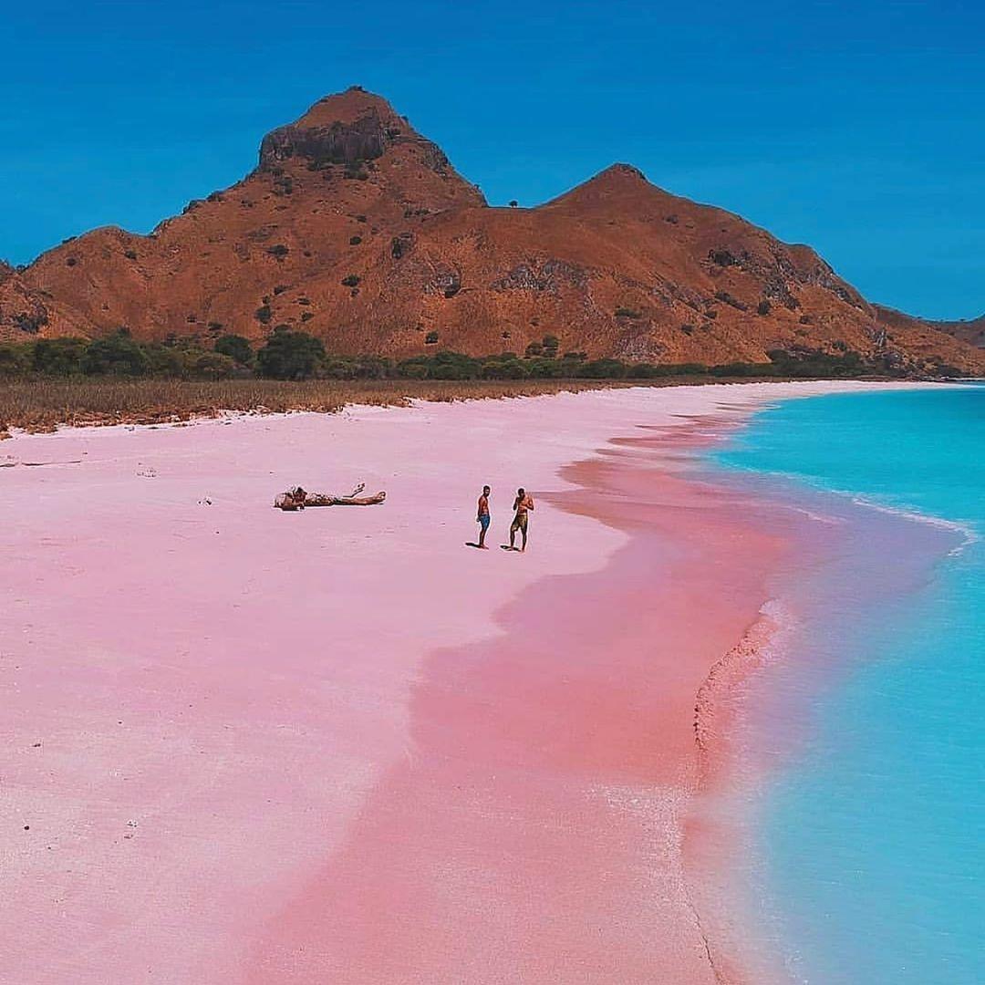 сплошь покрыто фото багамы розовый пляж стильная анимационная открыточка