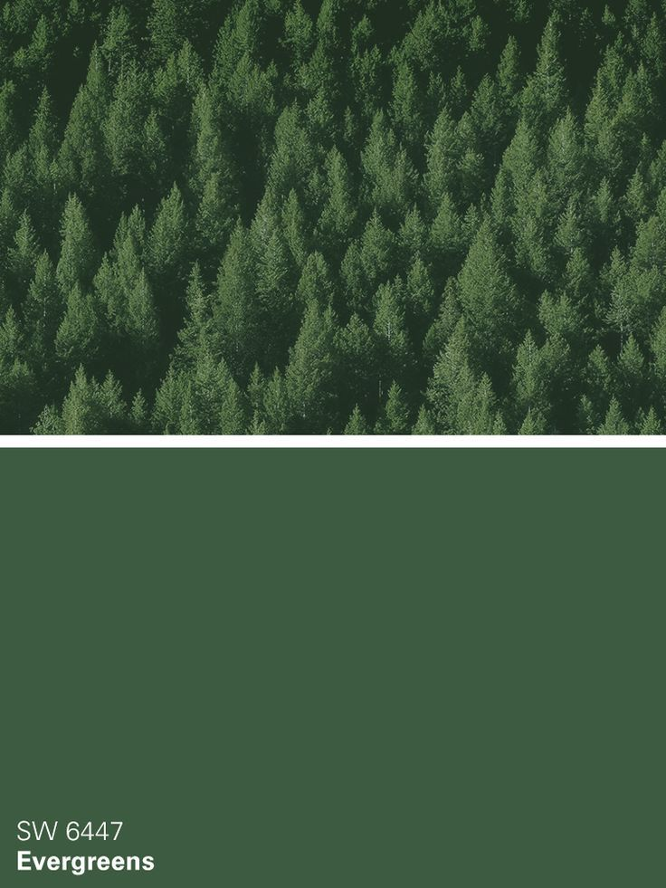 Sherwin Williams Green Paint Color Evergreens Sw 6447