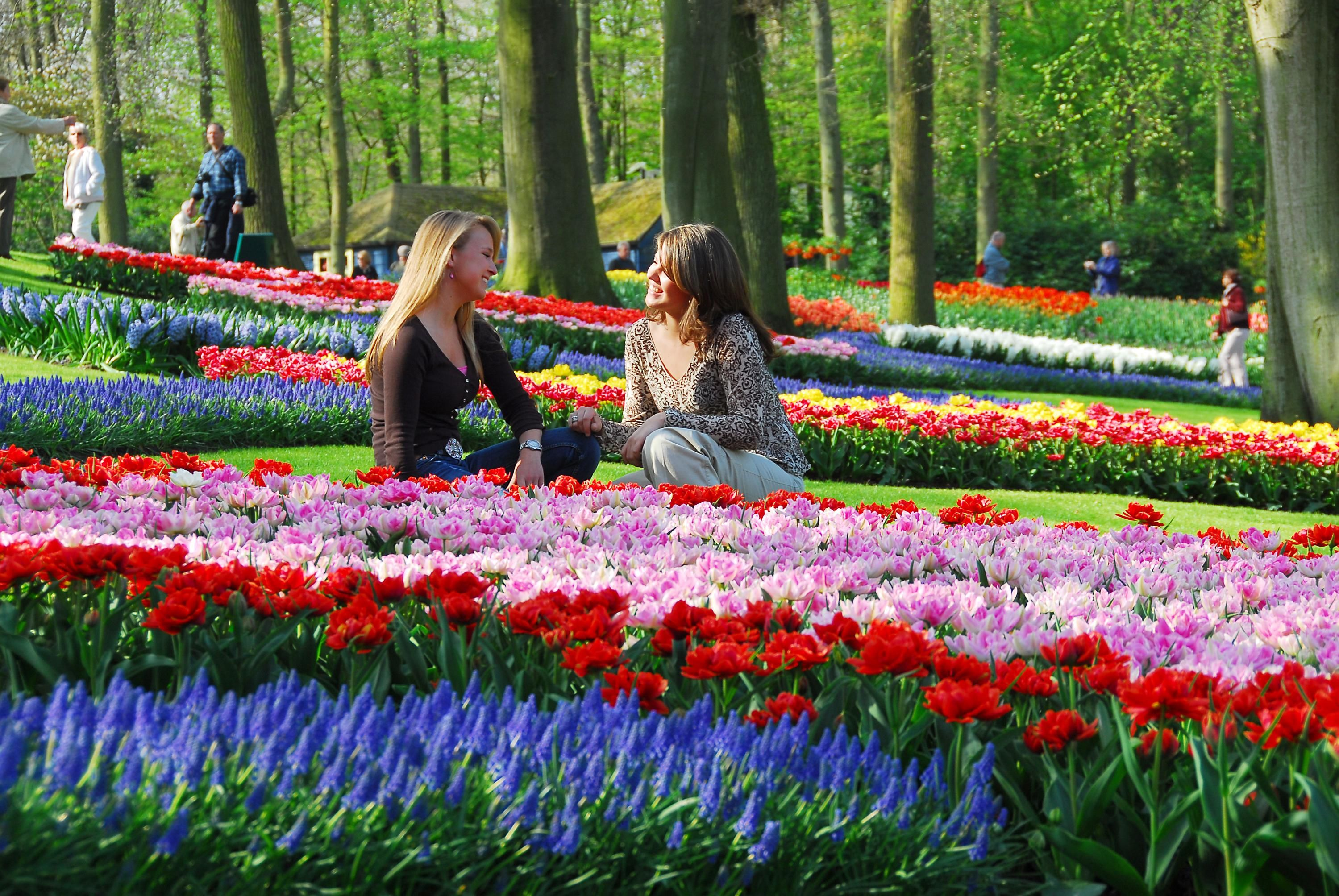 Keukenhof Gardens, Netherlands (22 March - 20 May) Transfer from Schiphol